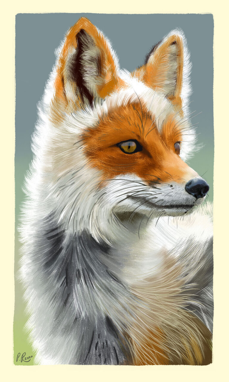 fox digital painting